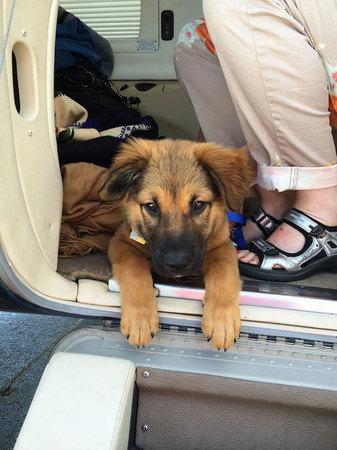 shelter-dog-airplane-transport-wings-of-rescue-yehuda-netanel-12.jpg