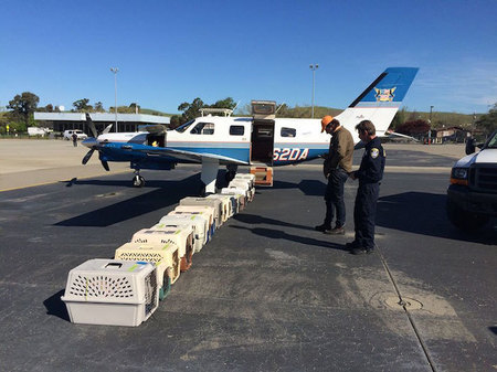 shelter-dog-airplane-transport-wings-of-rescue-yehuda-netanel-15.jpg