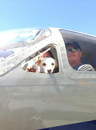 shelter-dog-airplane-transport-wings-of-rescue-yehuda-netanel-18.jpg