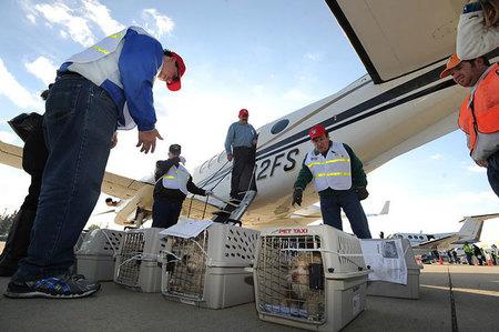 shelter-dog-airplane-transport-wings-of-rescue-yehuda-netanel-2.jpg