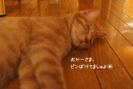 0813_01.jpg