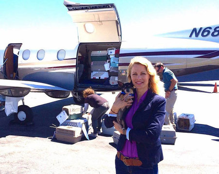shelter-dog-airplane-transport-wings-of-rescue-yehuda-netanel-11.jpg