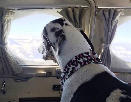 shelter-dog-airplane-transport-wings-of-rescue-yehuda-netanel-17.jpg