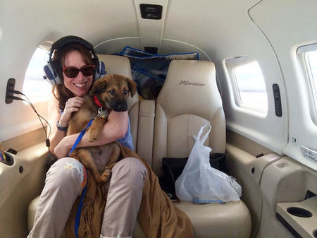 shelter-dog-airplane-transport-wings-of-rescue-yehuda-netanel-7.jpg