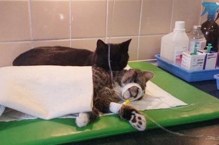 veterinary-nurse-cat-hugs-shelter-animals-radamenes-bydgoszcz-poland-10.jpg