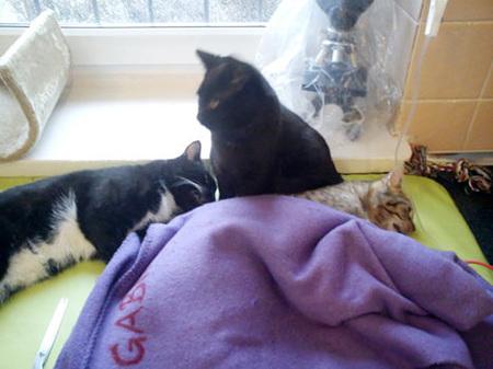 veterinary-nurse-cat-hugs-shelter-animals-radamenes-bydgoszcz-poland-9.jpg